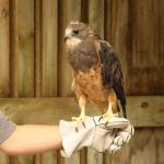 Macbride Raptor Project celebrates 30 years of rehab and education